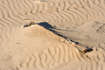 wind wave on sand