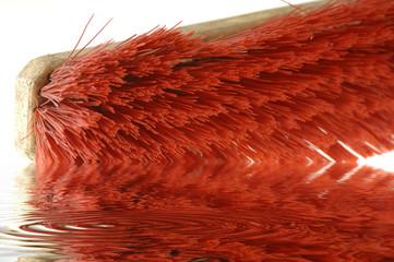 Rote Borsten im Wasser