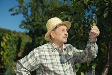 Senior vintner testing wine