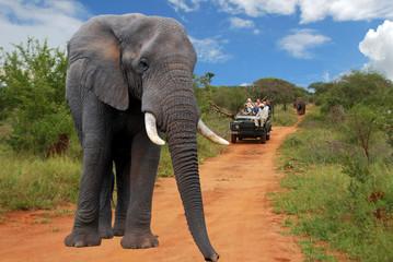 elefante nel parco Kruger