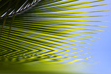 reflets de feuilles de palmier