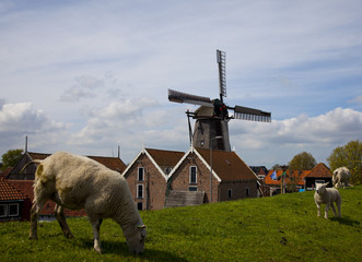 sheep with the a dutch windmill on the background