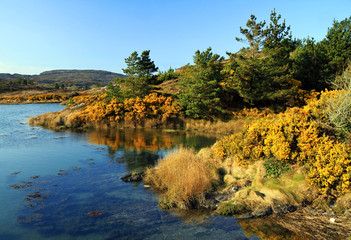 Yellow irish scenery