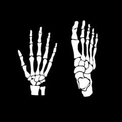 hand and feet bones vector illustration