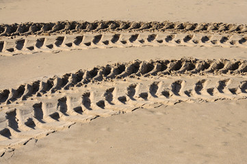 Tyre tracks on the beach