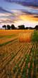 Golden sunset over farm field