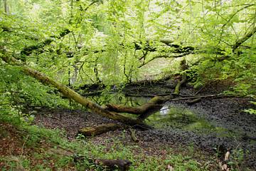 Wald, Naturschutz