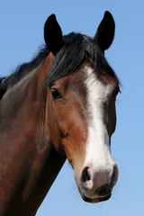 Kopf vom Pferd
