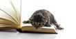 gattino sul libro