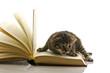 gattino sulle pagine di un libro