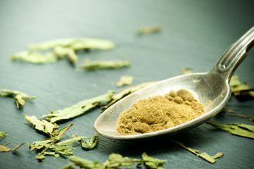 stevia sucre - stevia rebaudiana plante en poudre