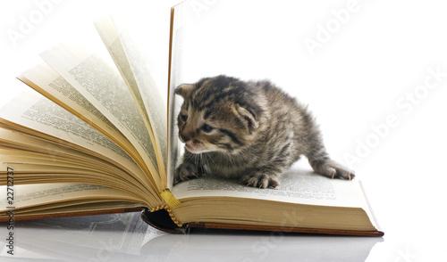 gattino legge un libro