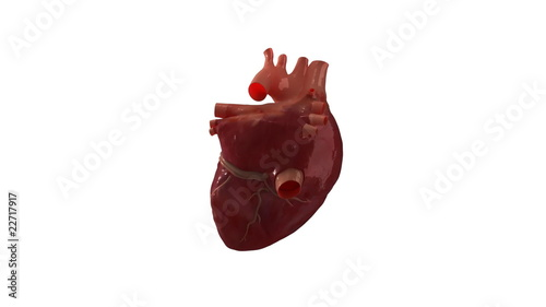 Rotating human heart with alpha channel