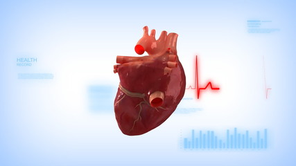 Human heart with pulse trace in loop