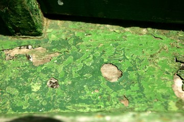 Green paint in wooden boat hull grunge aged
