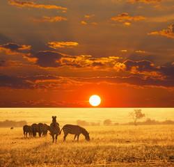 fototapeta zebry na sawannie o zachodzie słońca