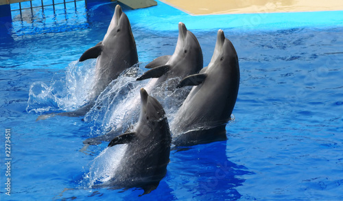 Dolphins - 22734511