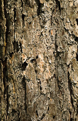 Close-up bark