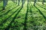 alberi 836