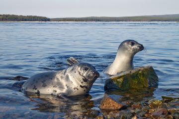 Seals