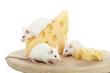 Mehrere Mäuse fressen einen Käse