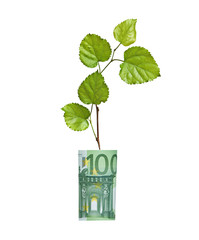 Tree growing from euro bill
