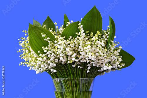 Foto op Aluminium Lelietje van dalen blooming lilies of the valley