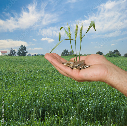 wheat as a gift of agriculture - 22779944