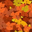 roleta: autumnal carpet of leaves