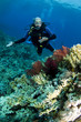 scuba diver on coral reef