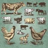 Fototapety farm animals vintage set (vector)