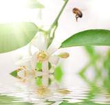Bee bee->Pollination poster