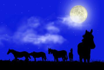 Pferde bei Vollmond