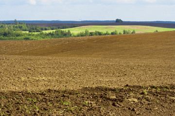 Autumn tillage bordered with the forest