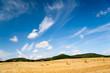 Sommerfelder in Thüringen