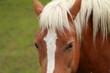 Cavalli & Sguardo