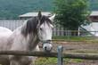 Maneggio & Equitazione