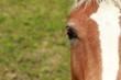Cavalli & Muso 4