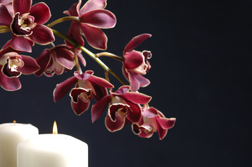 orchid(catteya) flower and candle on black