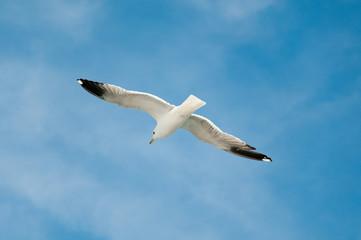 sea gull against blue sky