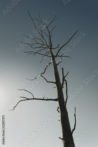 Dead tree against clear blue sky
