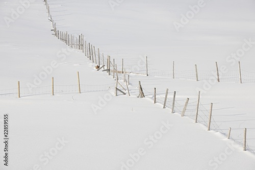 Fenced fields in Ytresand, Moskensoy, Loftofen, Norway
