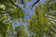 forêt de Chizé