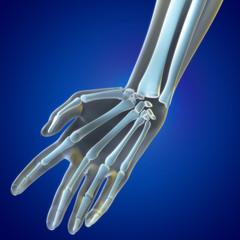 Medical illustration Wrist Region