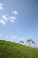 Hügel mit Bäumen