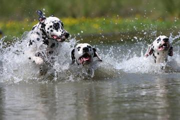 jeux d'eau des dalmatiens