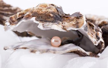 Auster auf Eis