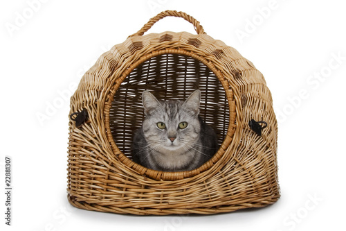 Cat in handbasket