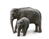 Elephants - mother and baby, isolated, path, shadow