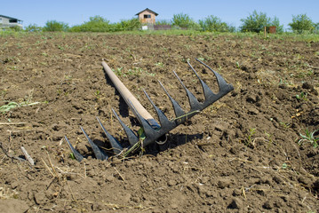 Rake lying on the plowed plot